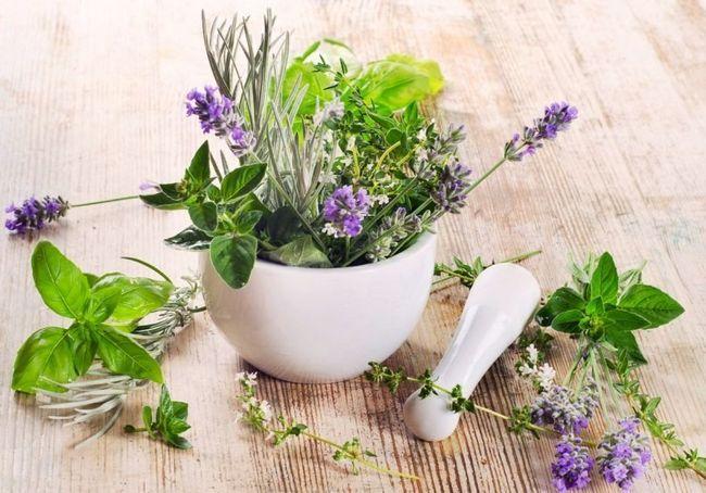Різні трави в ступці на столі