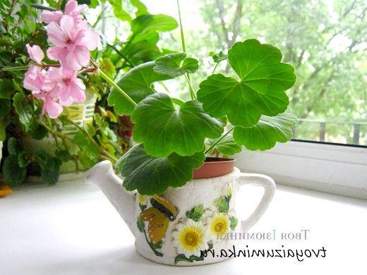 Улюблені квіти в будинку